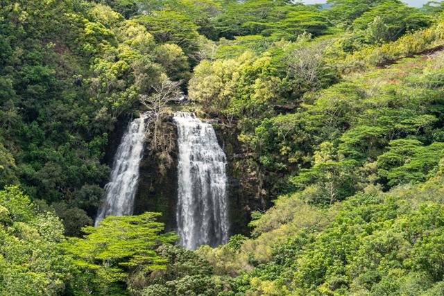 A photo of opaekaa falls in Hawaii
