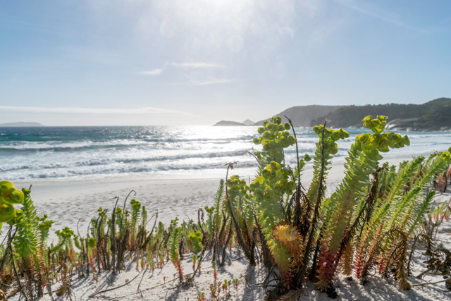 3-day-hike-wilsons-promontory