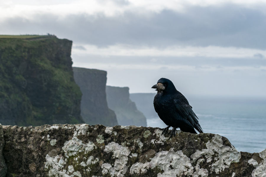 Cliffs of Moher Tour with Wild Rover Tours
